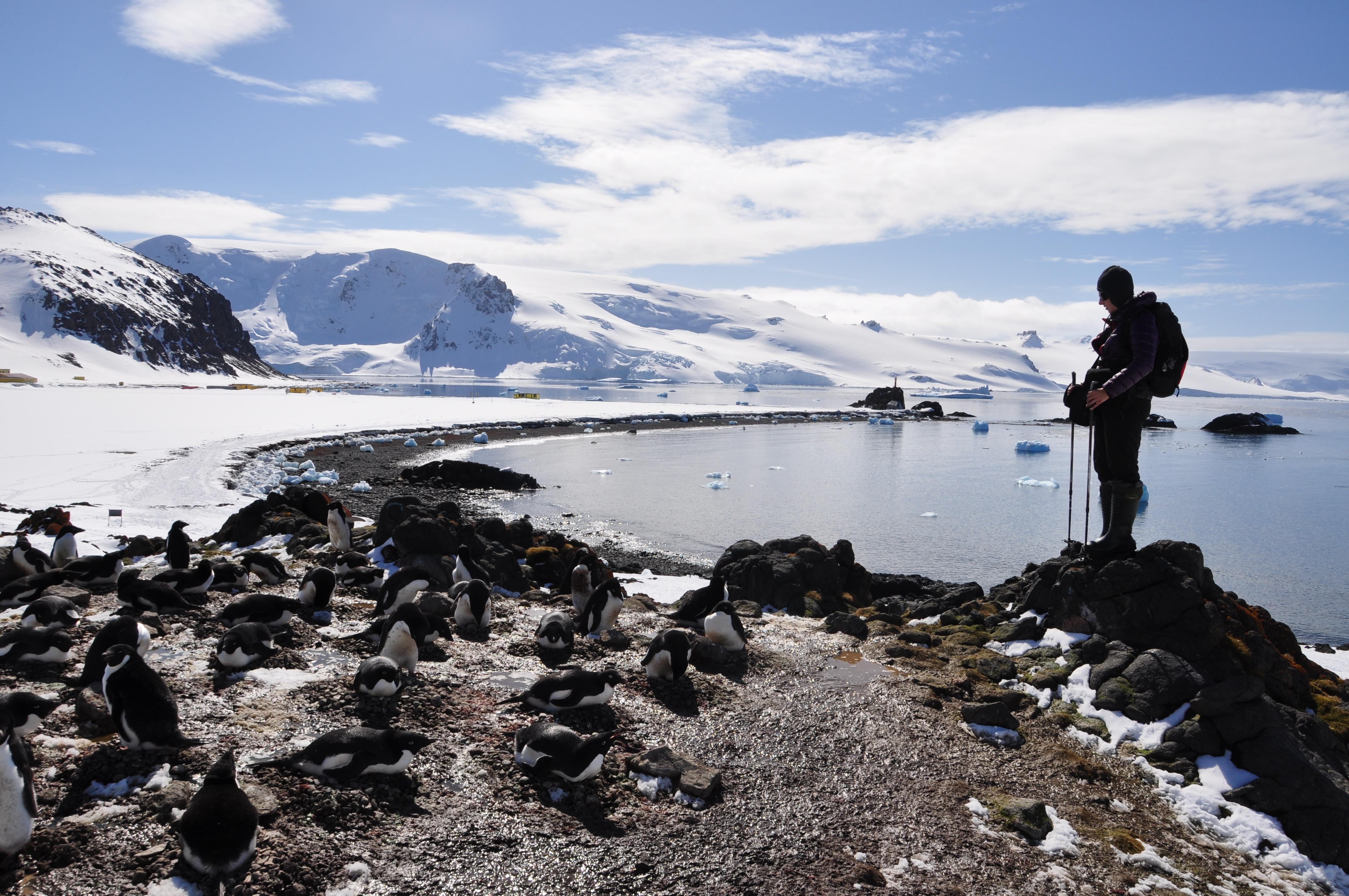 Obserwacja pingwinów Adeli | Observation of Adélie penguin's