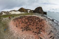 Liczenie piskląt pingwinów Adeli | Counting of Adélie penguin's chicks