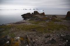 Grupy lęgowe pingwinów Adeli na przylądku Rakusy | Adélie penguin's roocery at Rakusa Point